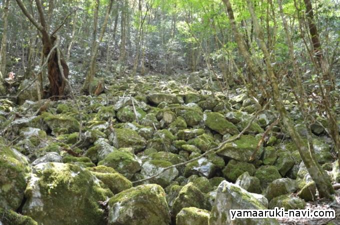大杉谷 苔むす岩場