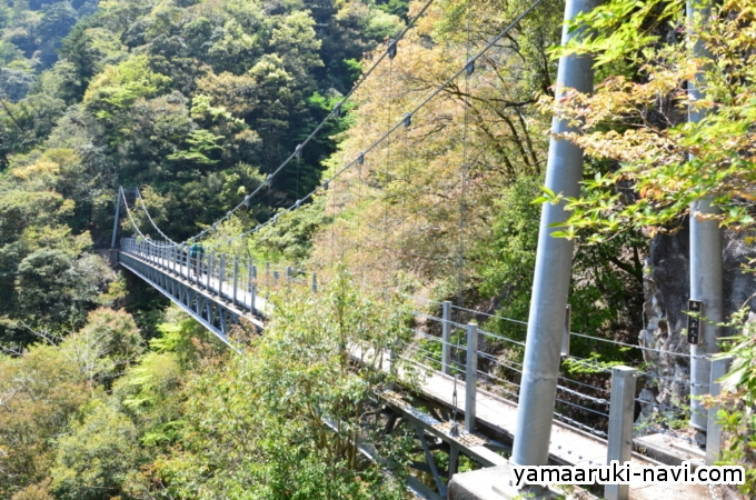 日浦杉吊橋