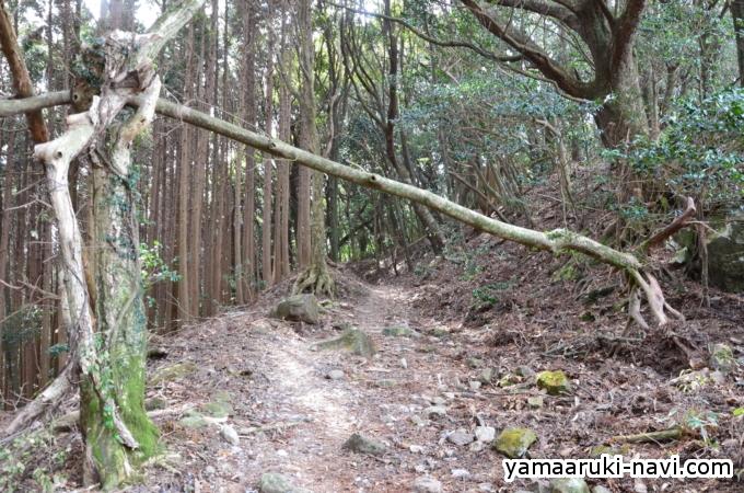 多良岳から金泉寺山小屋