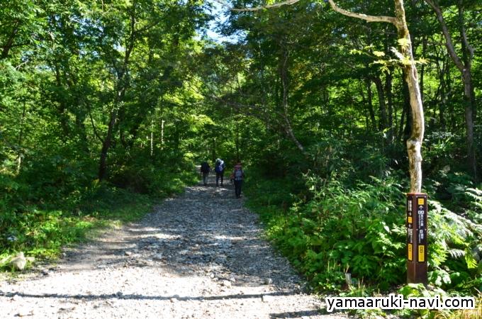 わさび平小屋から小池新道登山口に向かいます。